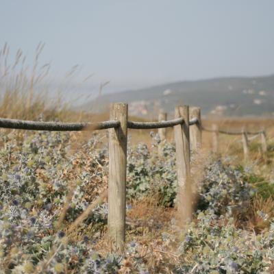 Gard de tara